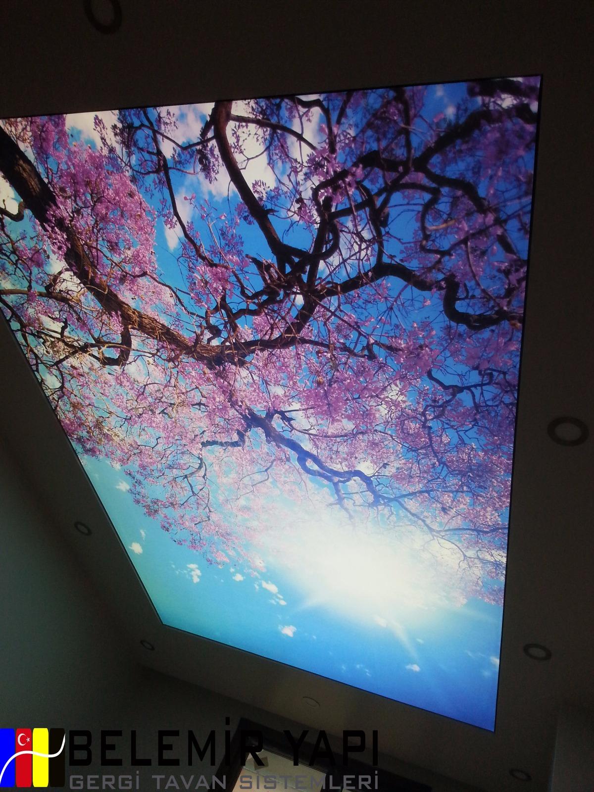 Germe tavan için tavanlar: tipler